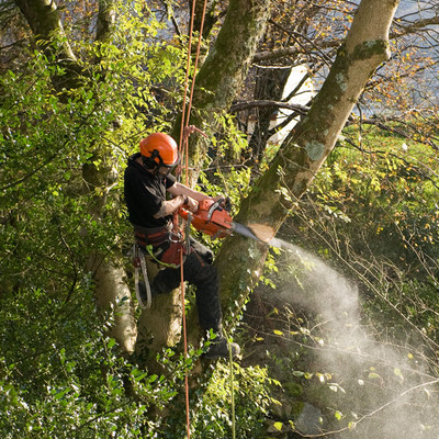 Tree Removal in Des Moines